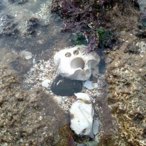 Face-like stone in sea with shocked expression